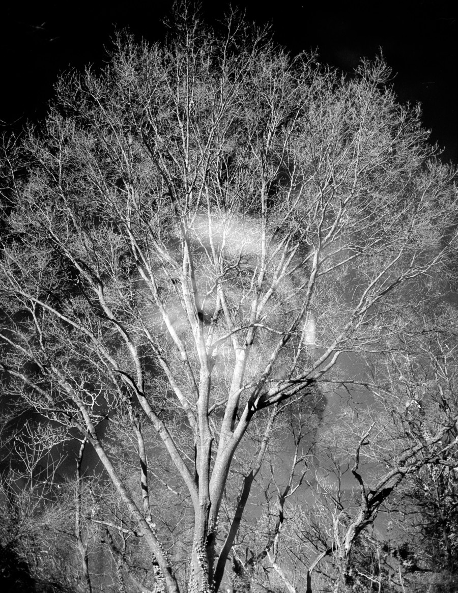 Benevolent  James River Tree Ghost